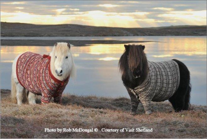 Photo By Rob McDougal  Courtesy of Visit Shetland